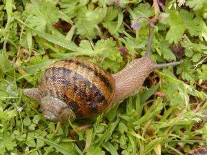 Photo Credit: www.upload.wikimedia.org
